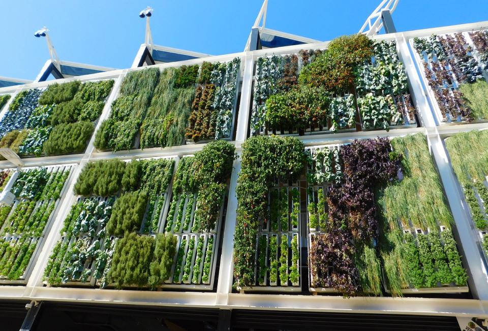 jardin vertical, ideal para proteger el medio ambiente
